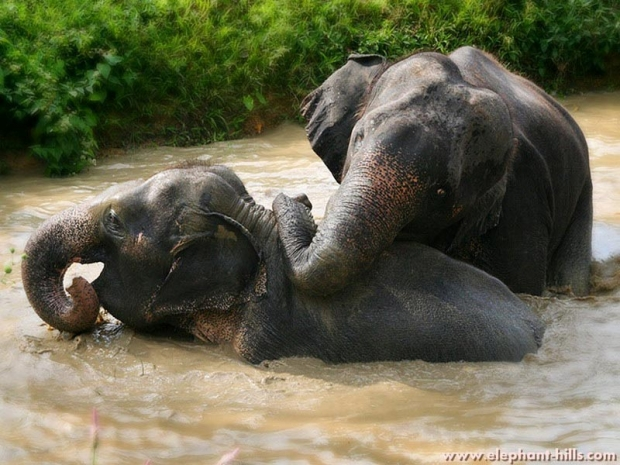 Mis het niet: korting bij Elephant Hills!