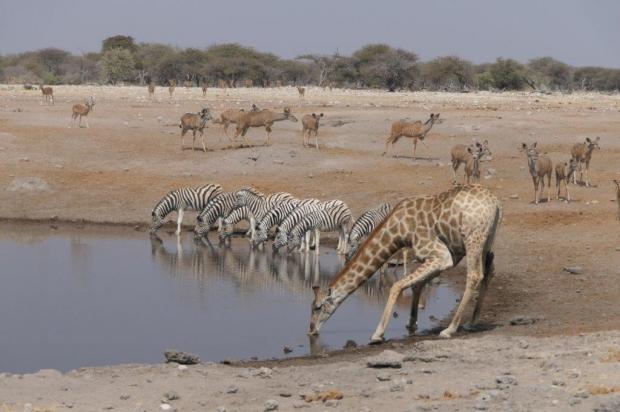 Namibie - Botswana reiservaring
