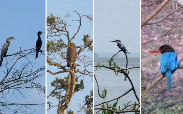 blog-vogels-sri-lanka