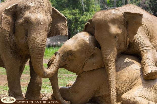 Olifanten van Elephant Hills