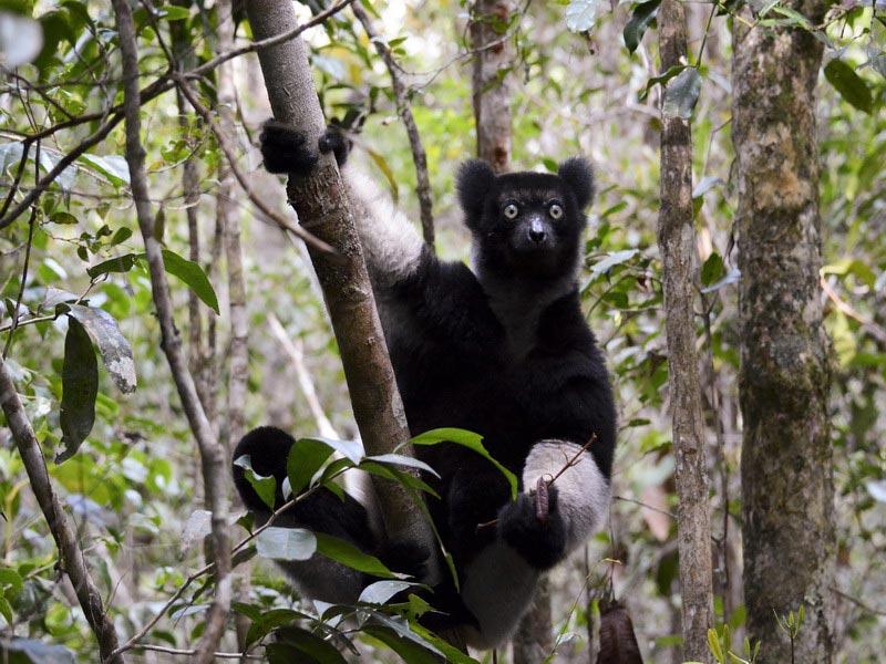 Natuurreis Madagascar