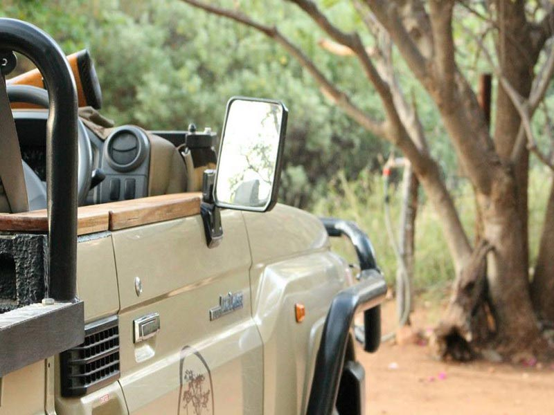 Safari in private game reserve
