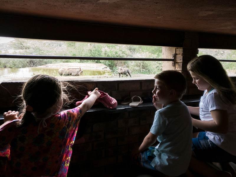 kinderen vanuit de 'hide' in Zuid-Afrika
