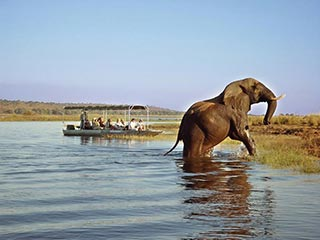 Chobe National Park - olifant met boot