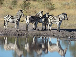 Botswana - Zebra's Mana Pools National Park