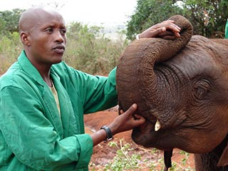 David Sheldrick Wildlife Trust - foto: Martijn Visscher