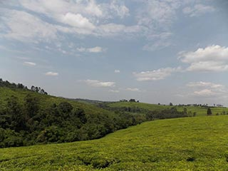 theeplantages Fort Portal