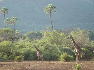 Lake Manyara - op safari in Lake Manyara National Park