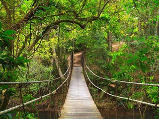 brug in Khao Yai National Park - foto: Archief