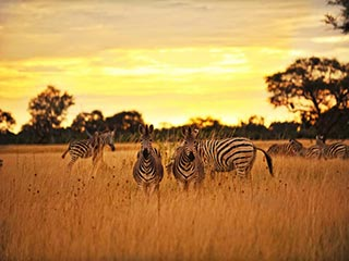 hwange national park - Op safari in Zimbabwe en Botswana