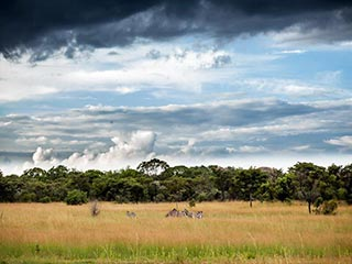 Hwange National Park - Zebra's in het bekende Hwange National Park
