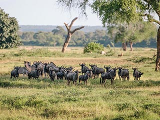 Gonarezhou National Park - Big Five land Zimbabwe - foto: Lokaal agent