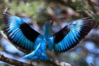 Marakele Game Reserve - vogel